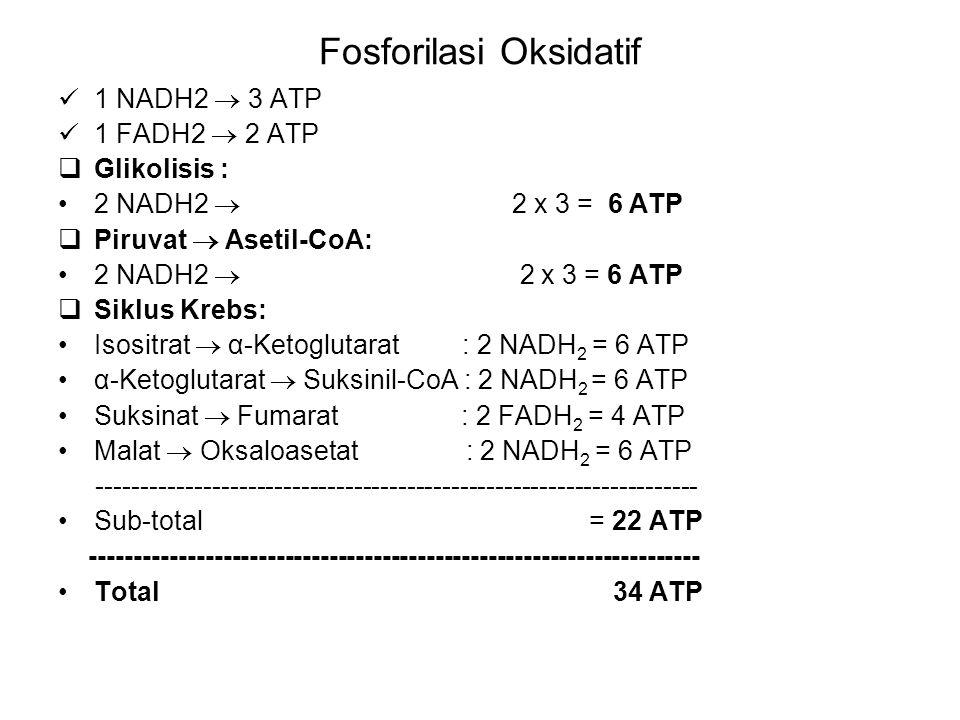 Fosforilasi Oksidatif 1 NADH2  3 ATP 1 FADH2  2 ATP  Glikolisis : 2 NADH2  2 x 3 = 6 ATP  Piruvat  Asetil-CoA: 2 NADH2  2 x 3 = 6 ATP  Siklus