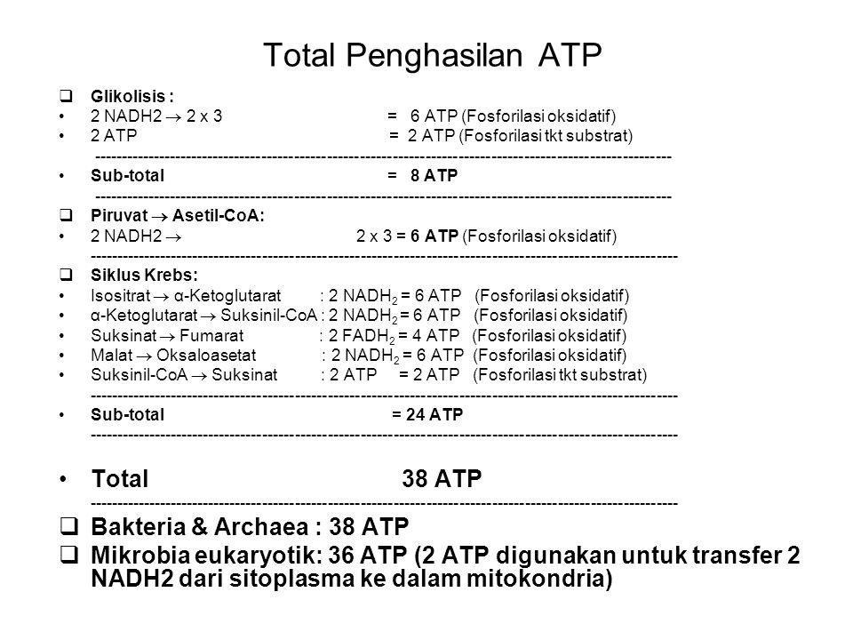 Total Penghasilan ATP  Glikolisis : 2 NADH2  2 x 3 = 6 ATP (Fosforilasi oksidatif) 2 ATP = 2 ATP (Fosforilasi tkt substrat) ------------------------
