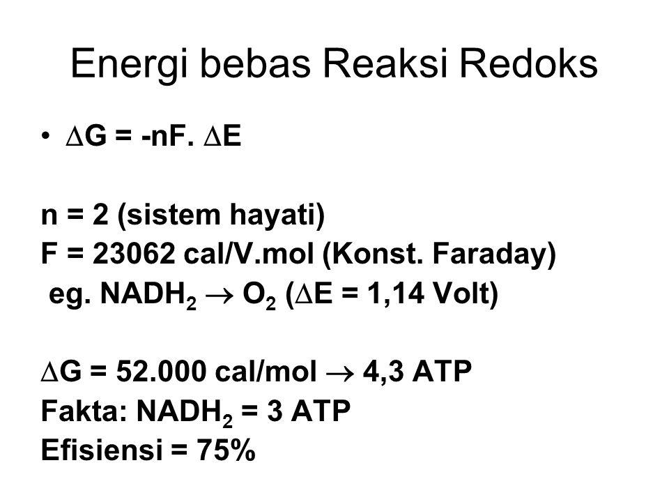 Energi bebas Reaksi Redoks  G = -nF.  E n = 2 (sistem hayati) F = 23062 cal/V.mol (Konst. Faraday) eg. NADH 2  O 2 (  E = 1,14 Volt)  G = 52.000