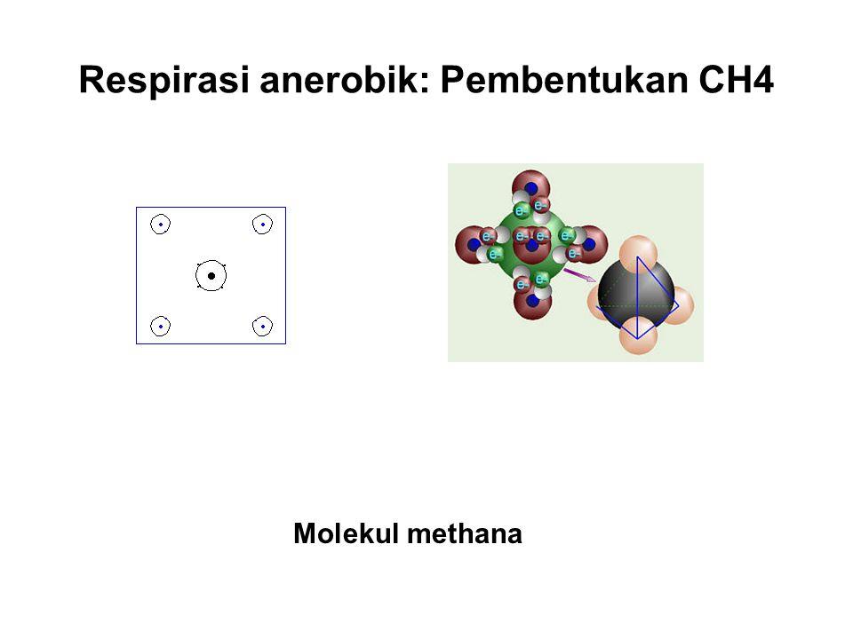 Respirasi anerobik: Pembentukan CH4 Molekul methana