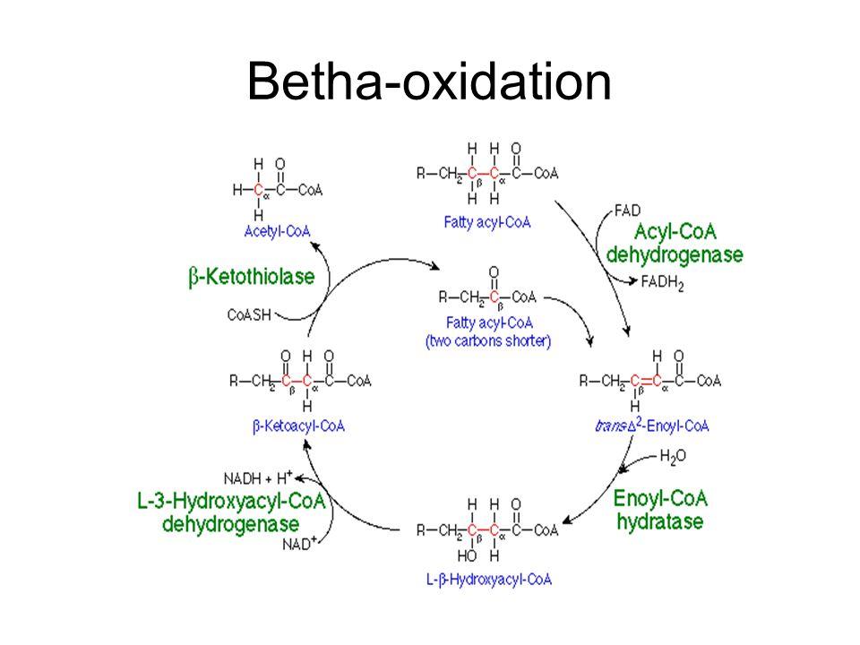 Betha-oxidation
