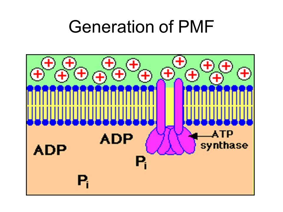 Generation of PMF