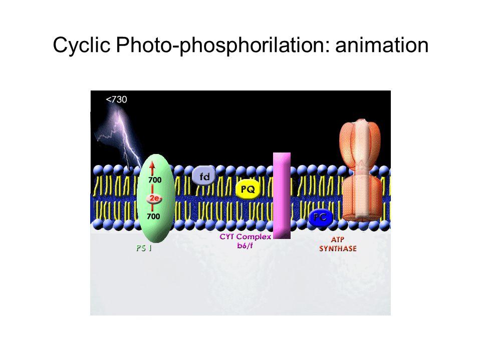 Cyclic Photo-phosphorilation: animation