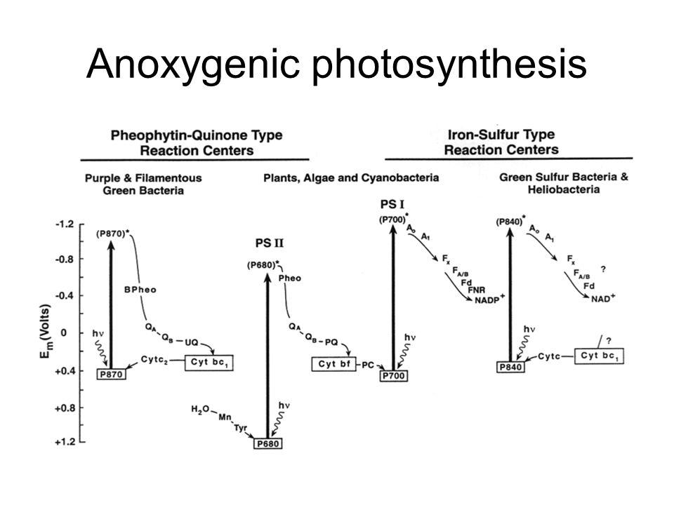 Anoxygenic photosynthesis