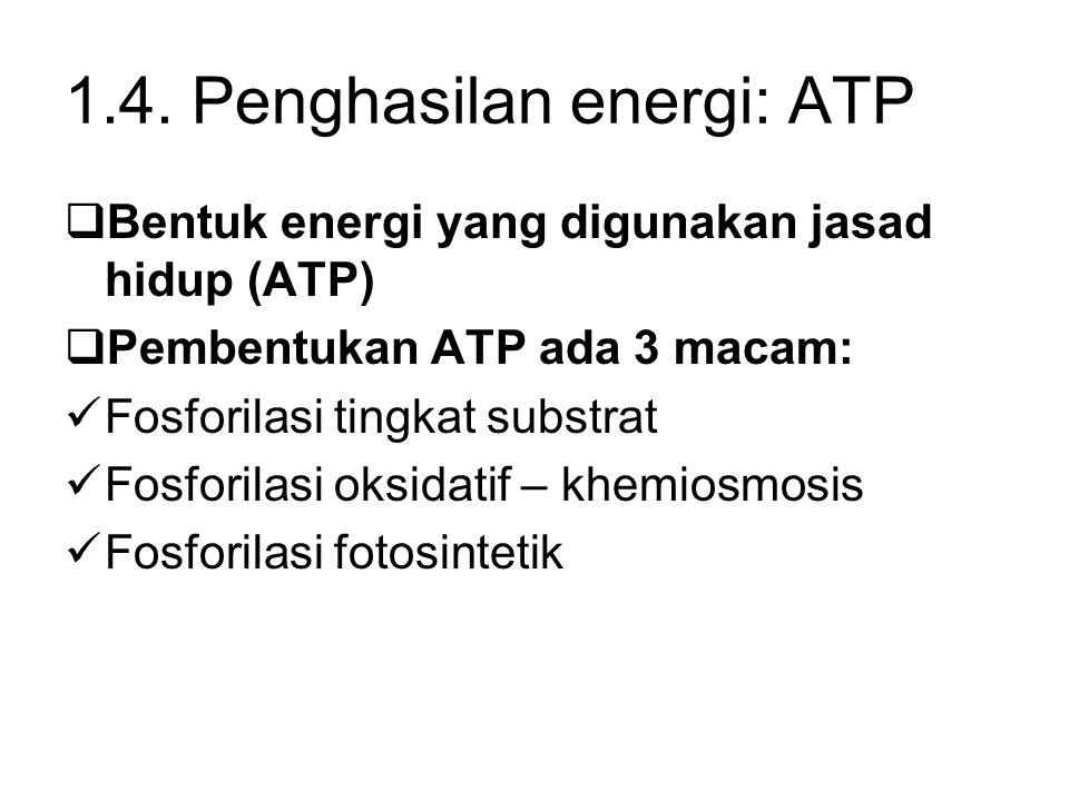 1.4. Penghasilan energi: ATP  Bentuk energi yang digunakan jasad hidup (ATP)  Pembentukan ATP ada 3 macam: Fosforilasi tingkat substrat Fosforilasi