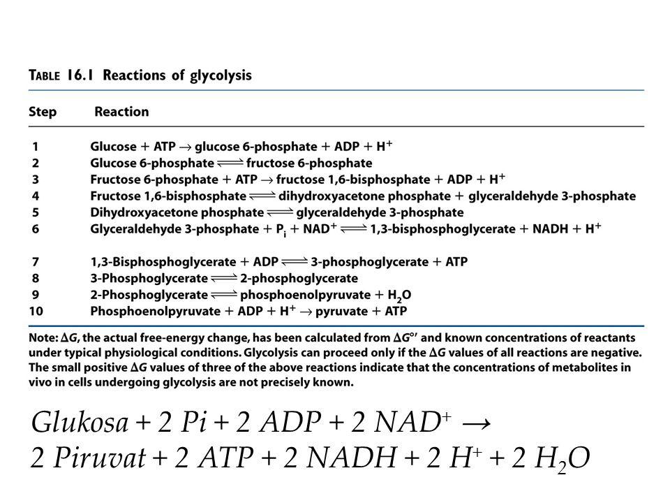 Glukosa + 2 Pi + 2 ADP + 2 NAD + → 2 Piruvat + 2 ATP + 2 NADH + 2 H + + 2 H 2 O
