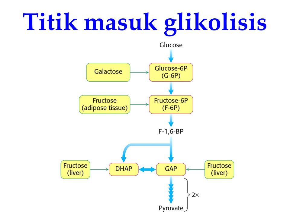Titik masuk glikolisis