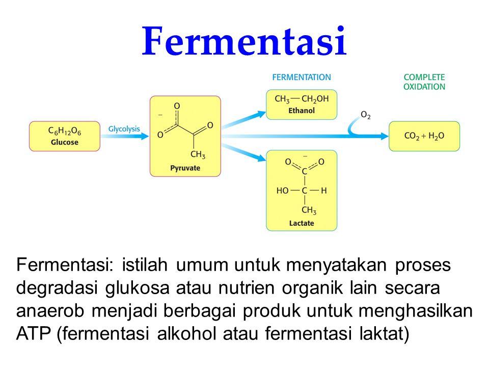 Fermentasi Fermentasi: istilah umum untuk menyatakan proses degradasi glukosa atau nutrien organik lain secara anaerob menjadi berbagai produk untuk m