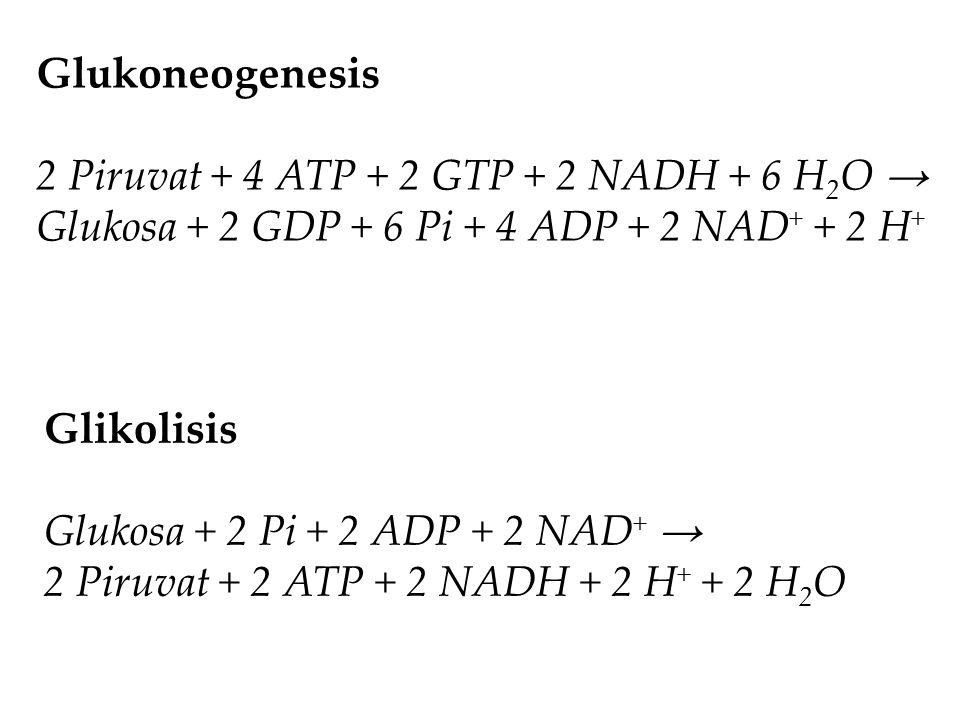 Glukoneogenesis 2 Piruvat + 4 ATP + 2 GTP + 2 NADH + 6 H 2 O → Glukosa + 2 GDP + 6 Pi + 4 ADP + 2 NAD + + 2 H + Glikolisis Glukosa + 2 Pi + 2 ADP + 2