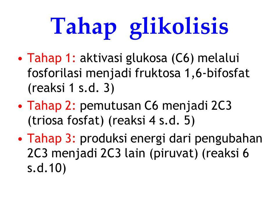 Tahap glikolisis Tahap 1: aktivasi glukosa (C6) melalui fosforilasi menjadi fruktosa 1,6-bifosfat (reaksi 1 s.d. 3) Tahap 2: pemutusan C6 menjadi 2C3