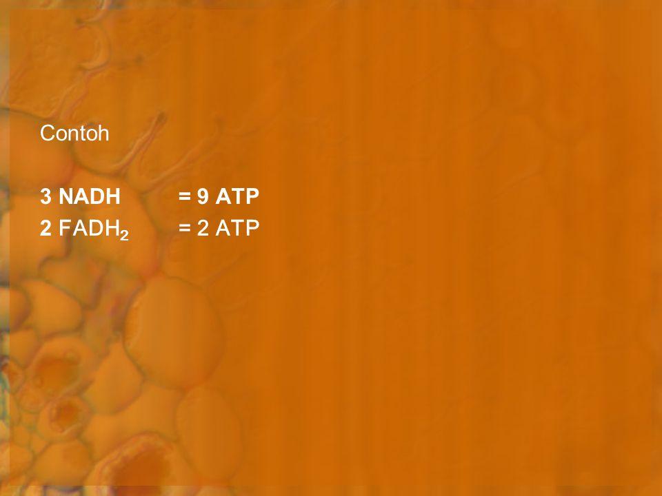 Contoh 3 NADH = 9 ATP 2 FADH 2 = 2 ATP