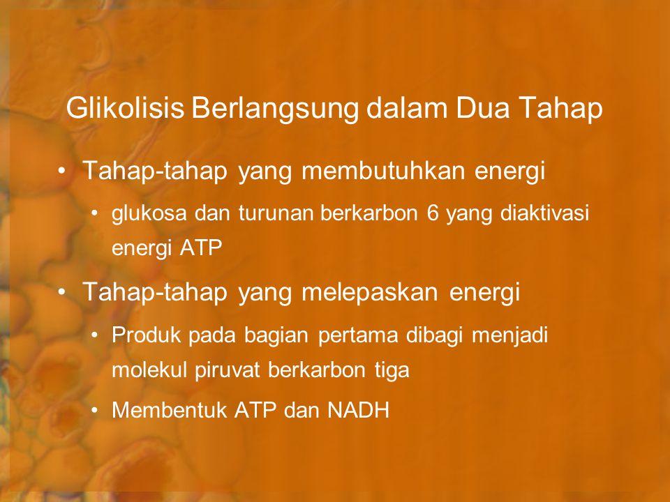 Glikolisis Berlangsung dalam Dua Tahap Tahap-tahap yang membutuhkan energi glukosa dan turunan berkarbon 6 yang diaktivasi energi ATP Tahap-tahap yang