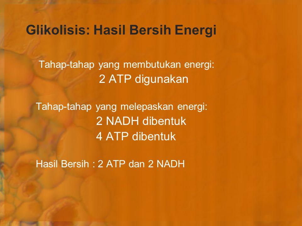 Glikolisis: Hasil Bersih Energi Tahap-tahap yang membutukan energi: 2 ATP digunakan Tahap-tahap yang melepaskan energi: 2 NADH dibentuk 4 ATP dibentuk
