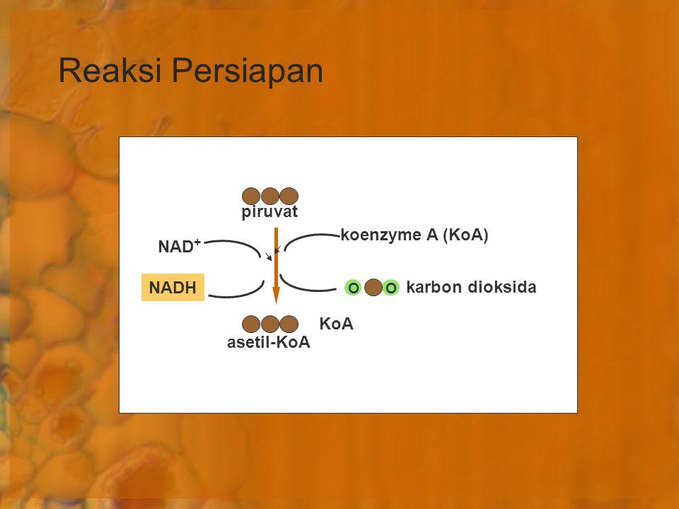 Reaksi Persiapan piruvat NAD + NADH koenzyme A (KoA) OO karbon dioksida KoA asetil-KoA