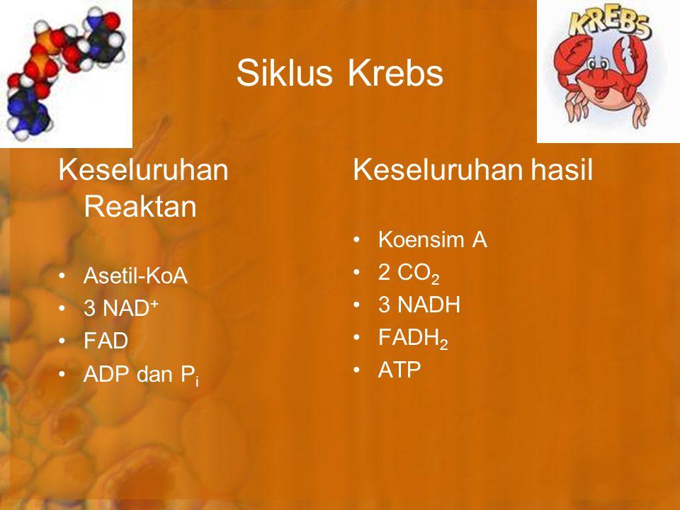 Siklus Krebs Keseluruhan hasil Koensim A 2 CO 2 3 NADH FADH 2 ATP Keseluruhan Reaktan Asetil-KoA 3 NAD + FAD ADP dan P i