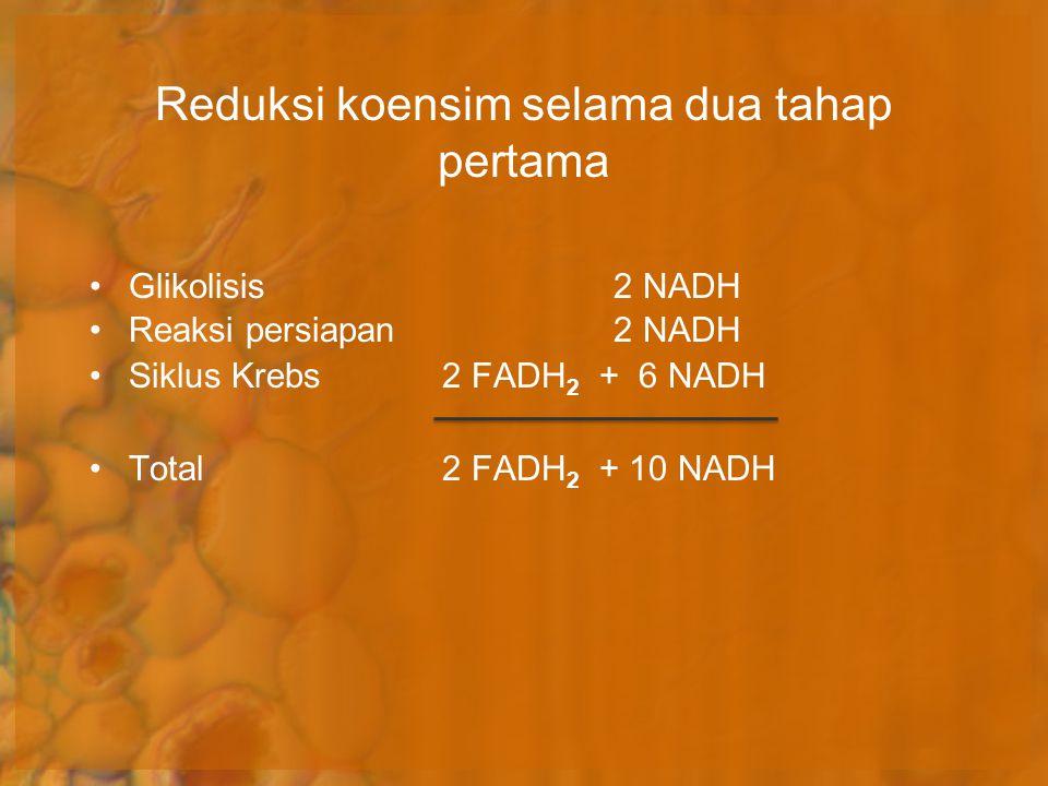 Reduksi koensim selama dua tahap pertama Glikolisis2 NADH Reaksi persiapan 2 NADH Siklus Krebs 2 FADH 2 + 6 NADH Total 2 FADH 2 + 10 NADH
