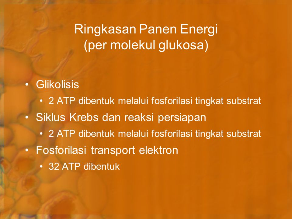 Glikolisis 2 ATP dibentuk melalui fosforilasi tingkat substrat Siklus Krebs dan reaksi persiapan 2 ATP dibentuk melalui fosforilasi tingkat substrat F