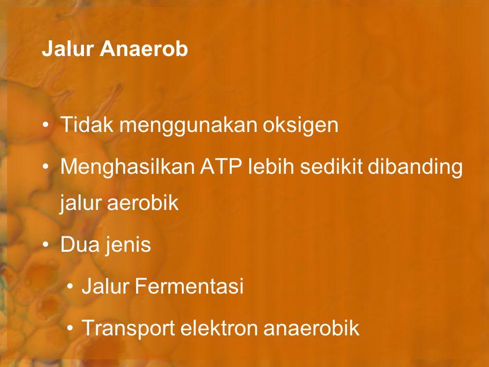 Jalur Anaerob Tidak menggunakan oksigen Menghasilkan ATP lebih sedikit dibanding jalur aerobik Dua jenis Jalur Fermentasi Transport elektron anaerobik