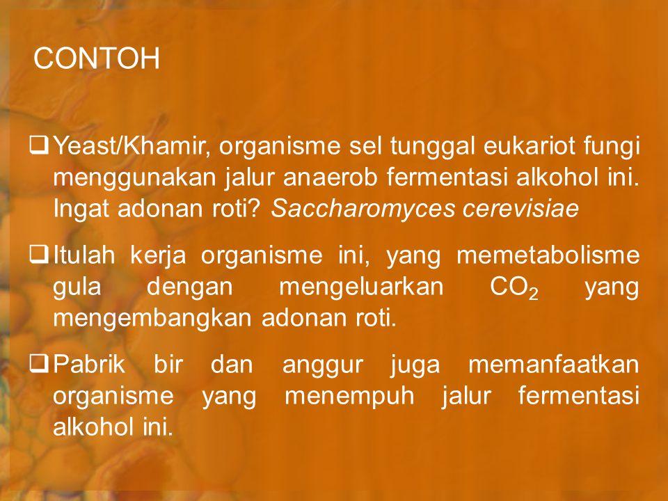 CONTOH  Yeast/Khamir, organisme sel tunggal eukariot fungi menggunakan jalur anaerob fermentasi alkohol ini. Ingat adonan roti? Saccharomyces cerevis