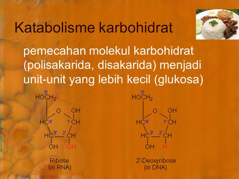 Terjadi di dalam mitokondria Koensim membawa elektron ke rantai transfer elektron Transfer elektron membentuk gradien ion H + Aliran H + menuruni gradien mendorong pembentukan ATP Fosforilasi Transfer Elektron