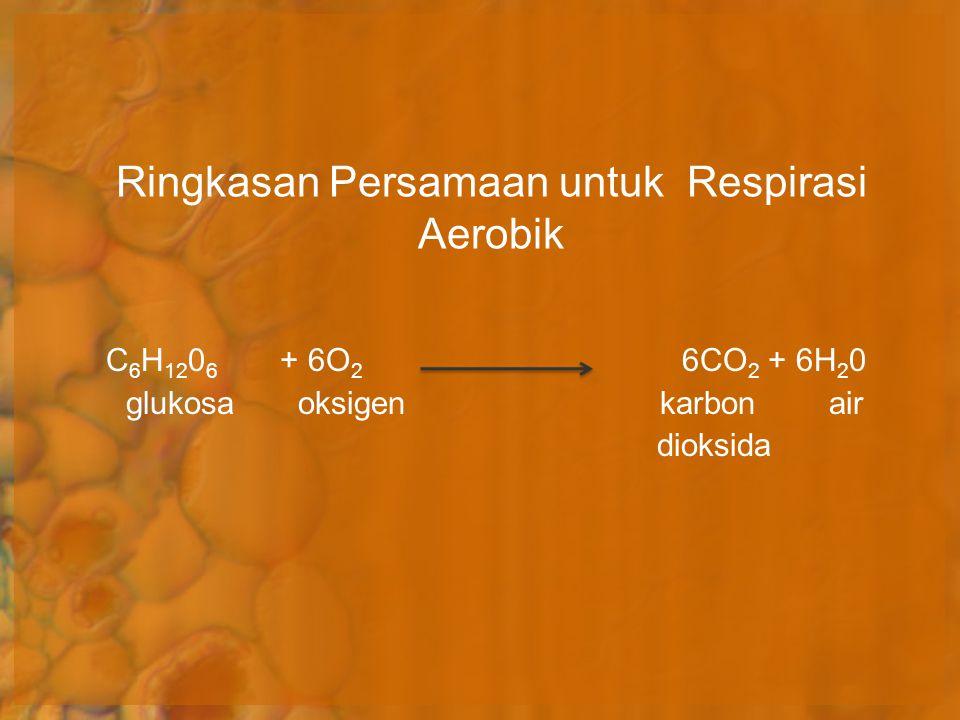 Ringkasan Persamaan untuk Respirasi Aerobik C 6 H 12 0 6 + 6O 2 6CO 2 + 6H 2 0 glukosa oksigen karbon air dioksida
