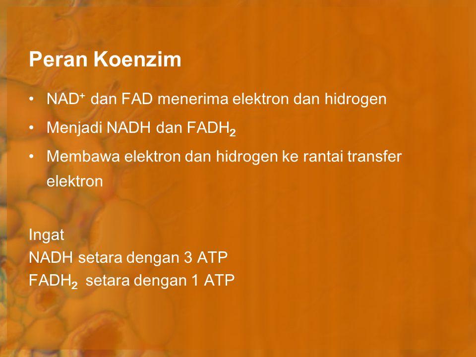 Peran Koenzim NAD + dan FAD menerima elektron dan hidrogen Menjadi NADH dan FADH 2 Membawa elektron dan hidrogen ke rantai transfer elektron Ingat NAD