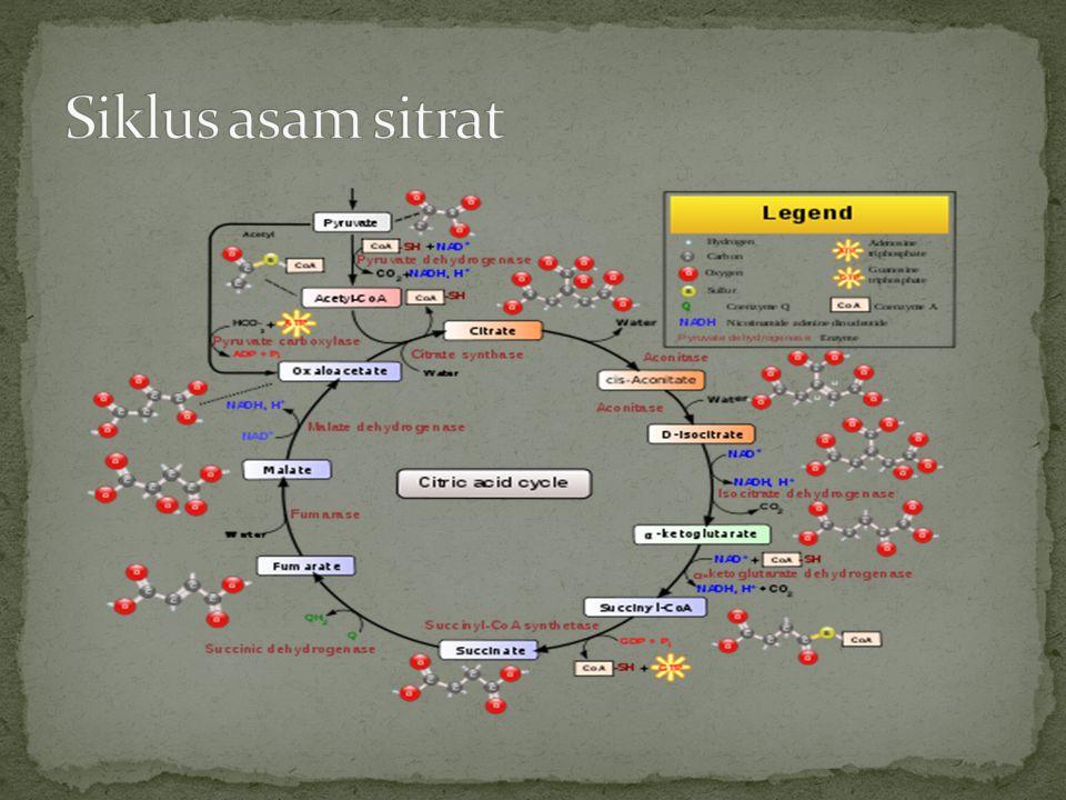Struktur Malat Dehidrogenase Setiap subunit dari malat dehidrogenase memiliki 2 domain berbeda yang bervariasi dalam struktur dan fungsi.
