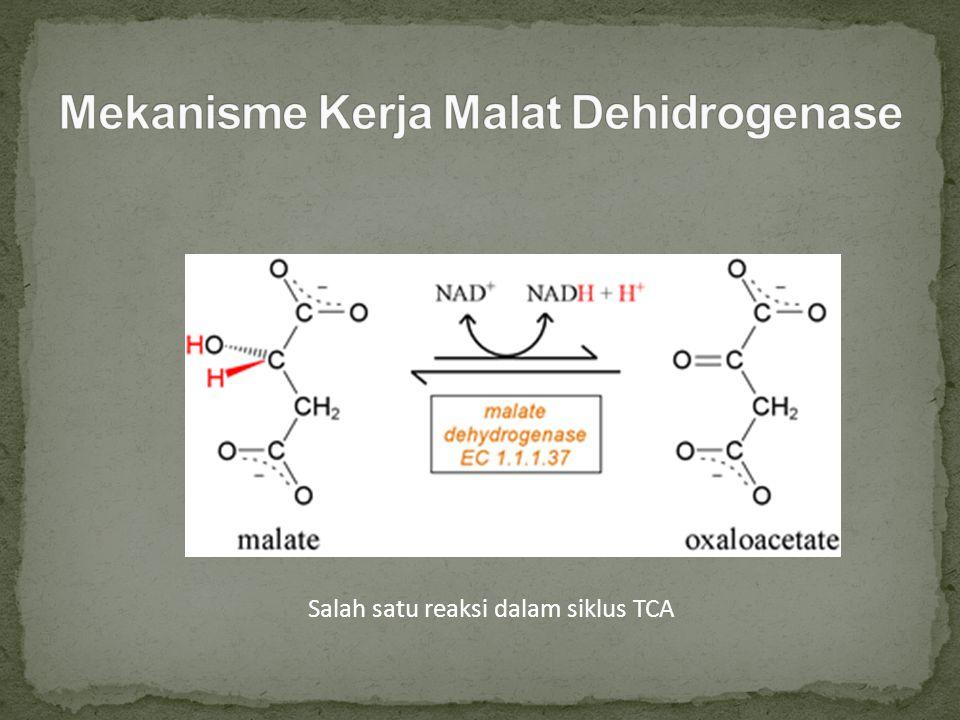 Malat dehidrogenase (EC 1.1.37) enzim yang terlibat dalam siklus asam sitrat (TCA) yang mengkatalisis reaksi yang merubah dari L-malat menjadi oksaloasetat dengan menggunakan NAD+.
