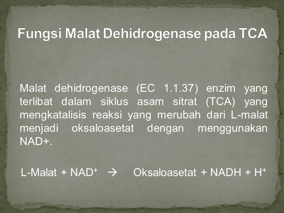 Malat dehidrogenase memiliki fungsi yang berbeda dengan enzim malic yang mengkatalisis reaksi malat menjadi piruvat dengan menghasilkan NADPH Sisi aktif enzim malat dehidrogenase