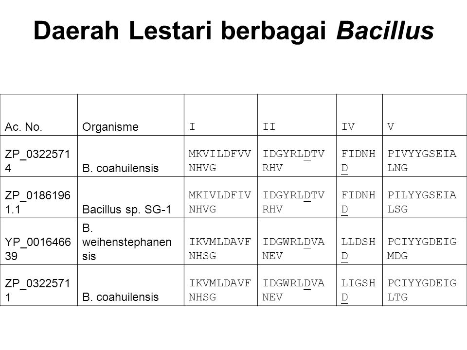 Ac. No.Organisme IIIIVV ZP_0322571 4B. coahuilensis MKVILDFVV NHVG IDGYRLDTV RHV FIDNH D PIVYYGSEIA LNG ZP_0186196 1.1Bacillus sp. SG-1 MKIVLDFIV NHVG