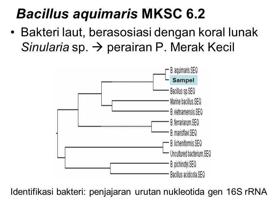 Sampel Bacillus aquimaris MKSC 6.2 Bakteri laut, berasosiasi dengan koral lunak Sinularia sp.  perairan P. Merak Kecil Identifikasi bakteri: penjajar
