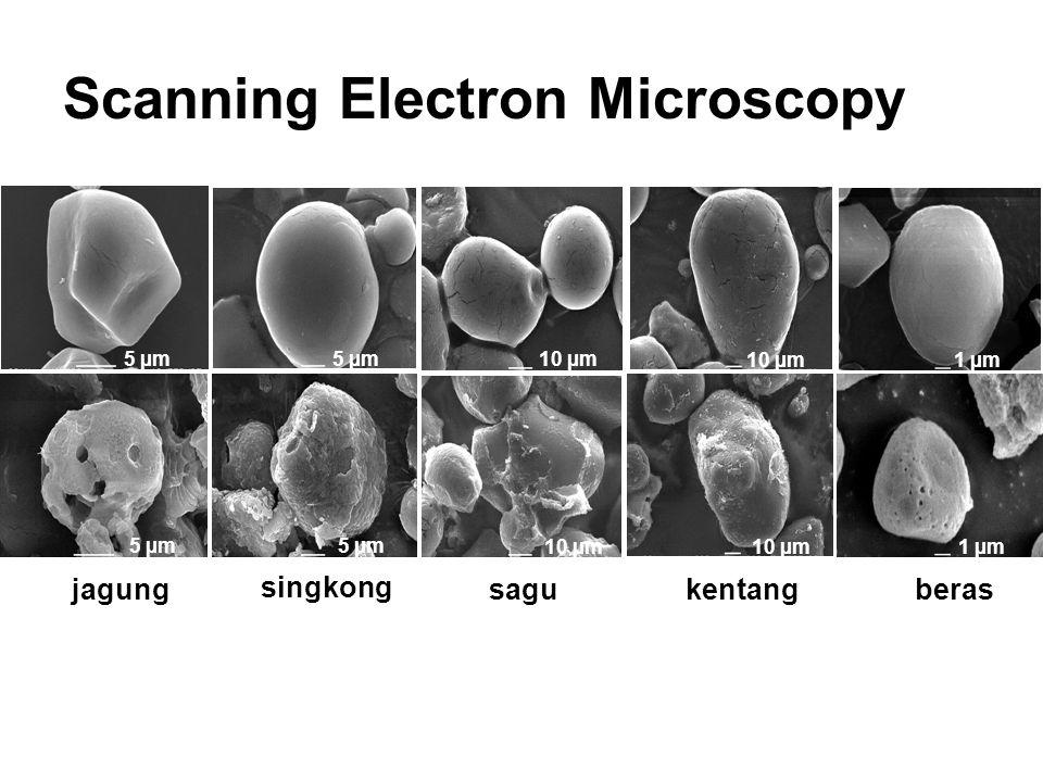 5 µm 10 µm 5 µm 10 µm1 µm 5 µm 10 µm 5 µm 10 µm 1 µm jagung singkong sagukentangberas Scanning Electron Microscopy