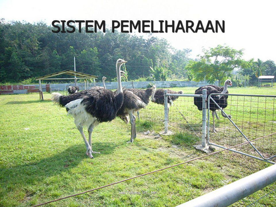 SISTEM PEMELIHARAAN Heli Tistiana, SPt., MP.