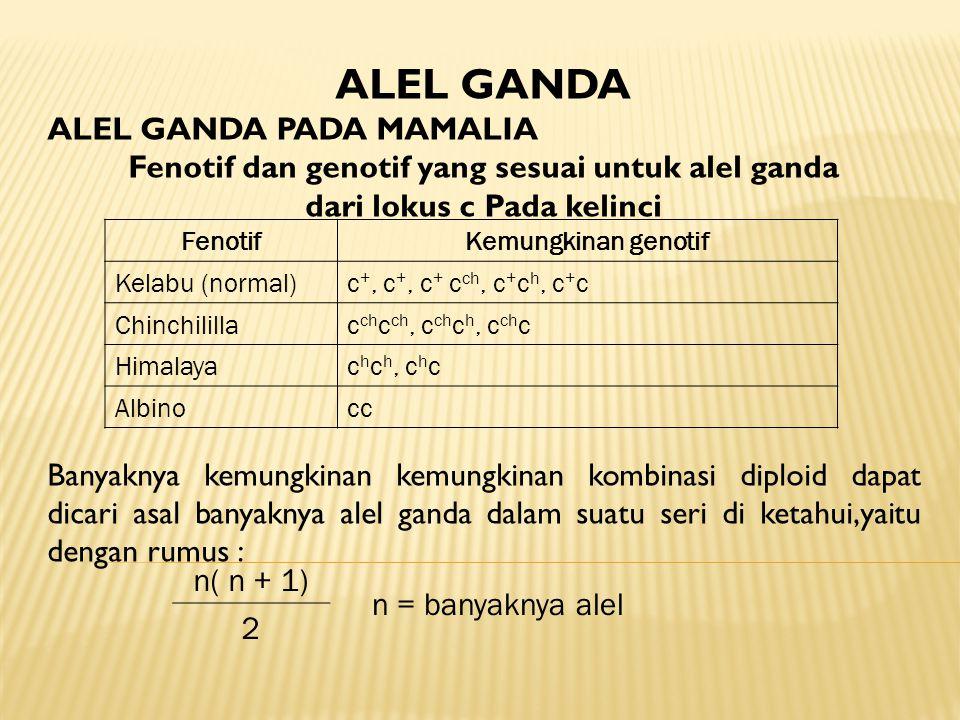 ALEL GANDA ALEL GANDA PADA MAMALIA Fenotif dan genotif yang sesuai untuk alel ganda dari lokus c Pada kelinci Banyaknya kemungkinan kemungkinan kombin