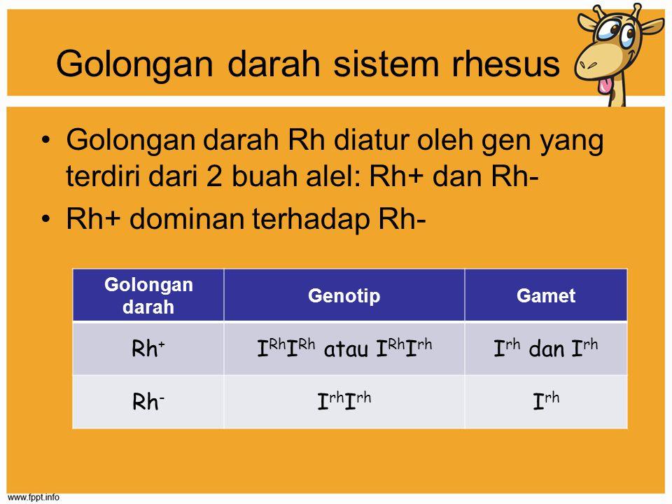 Golongan darah sistem rhesus Golongan darah Rh diatur oleh gen yang terdiri dari 2 buah alel: Rh+ dan Rh- Rh+ dominan terhadap Rh- Golongan darah Geno