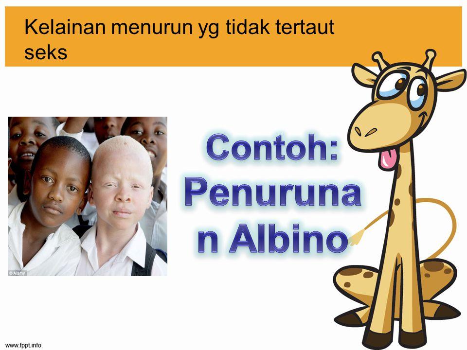 Albino Jika seorang albino menikah dengan orang yang normal carrier, bagaimana kemungkinan keturunannya?