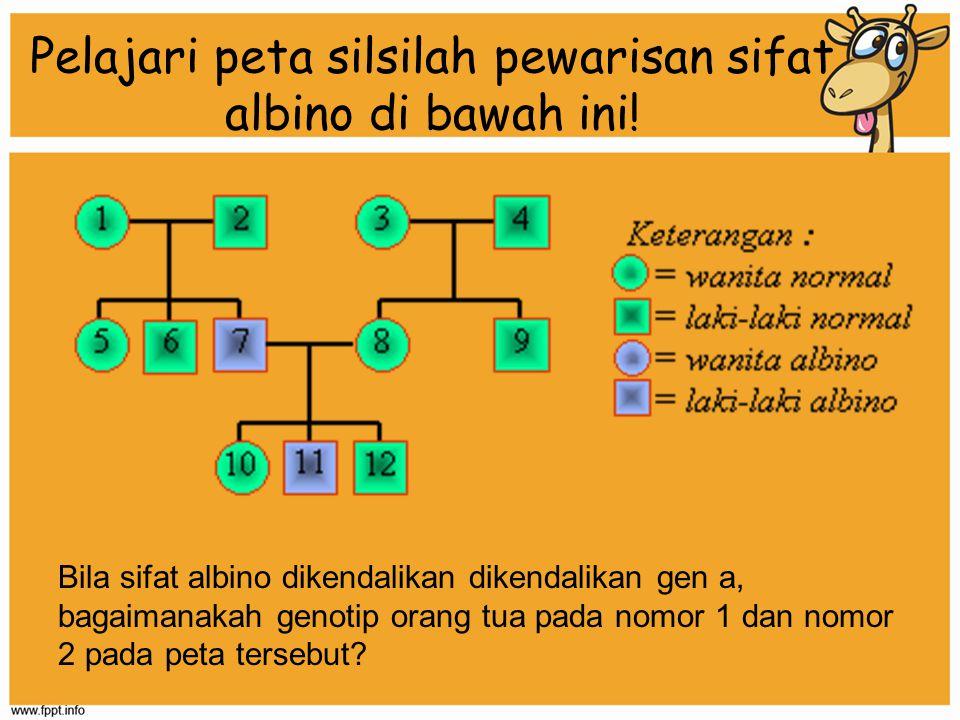 Pelajari peta silsilah pewarisan sifat albino di bawah ini! Bila sifat albino dikendalikan dikendalikan gen a, bagaimanakah genotip orang tua pada nom