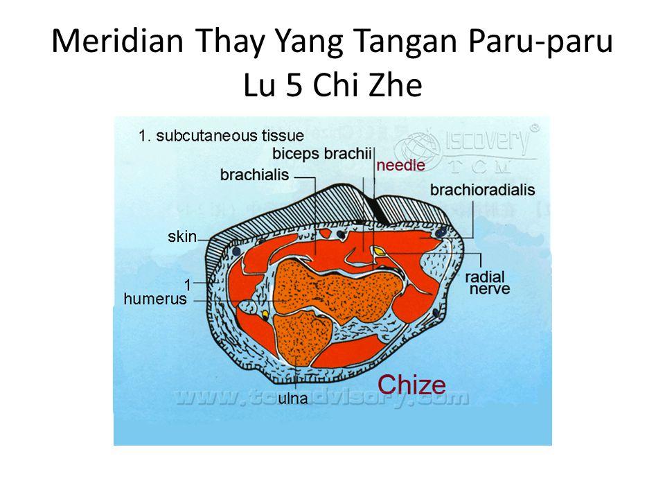 Meridian Thay Yang Tangan Paru-paru Lu 6 Kung Cui Letak: Pada sisi radial lengan bawah 7 Cun diatas pergelangan tangan.