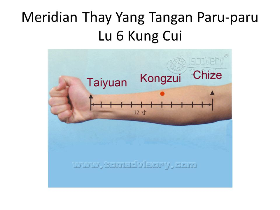 Meridian Thay Yang Tangan Paru-paru Lu 9 Thay Yen Letak: Pada lekukan lipat pergelangan tangan, lateral articulatio radialis.