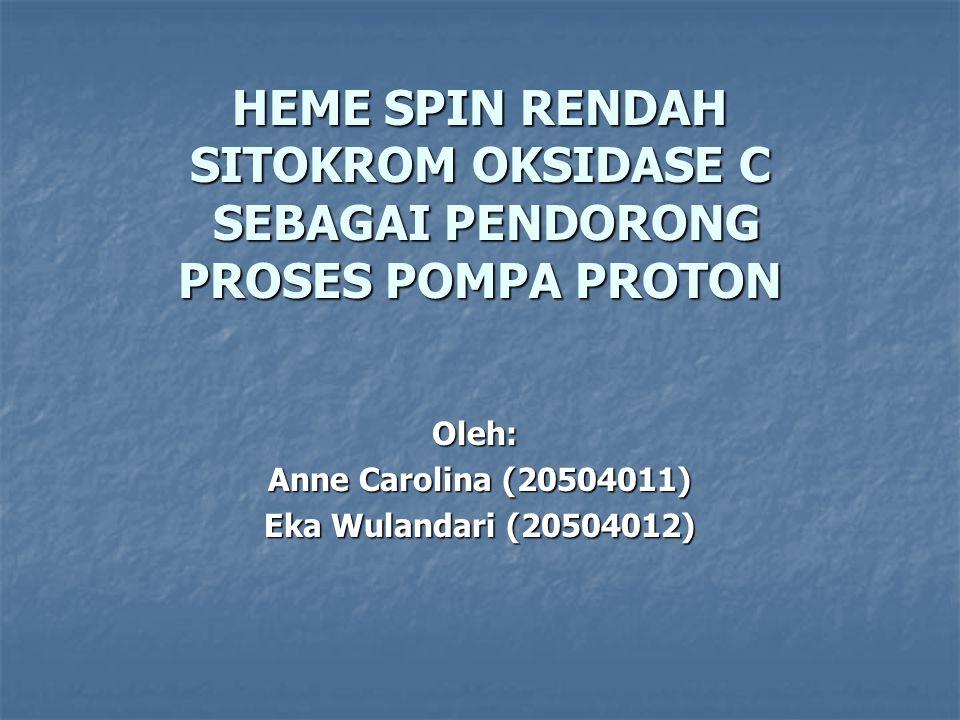 Sitokrom C Oksidase Enzim kunci pada respirasi aerob Enzim kunci pada respirasi aerob Mengkatalisis transfer elektron dari sitokrom c ke oksigen Mengkatalisis transfer elektron dari sitokrom c ke oksigen Terdiri dari subunit I dan II Terdiri dari subunit I dan II Memiliki empat kofaktor redoks aktif: Memiliki empat kofaktor redoks aktif: - Cu A, Cu B, heme a, heme a 3