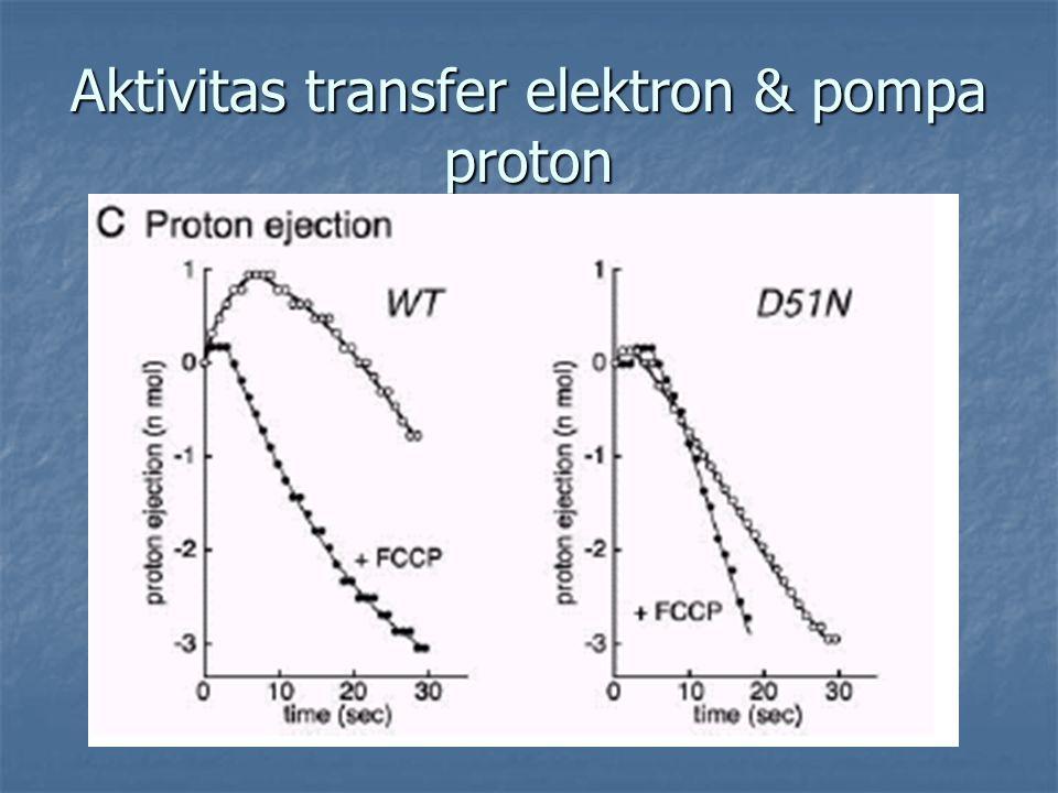 Aktivitas transfer elektron & pompa proton