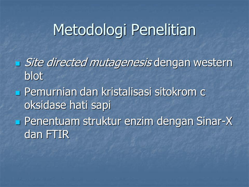 Metodologi Penelitian Site directed mutagenesis dengan western blot Site directed mutagenesis dengan western blot Pemurnian dan kristalisasi sitokrom