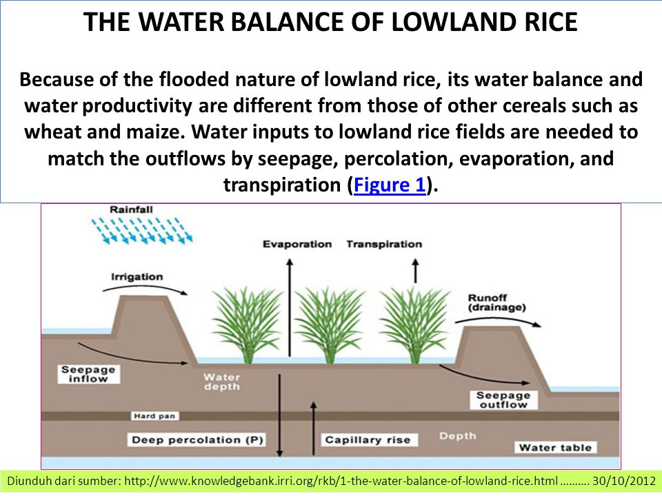 Diunduh dari sumber: http://www.knowledgebank.irri.org/rkb/1-the-water-balance-of-lowland-rice.html ……….