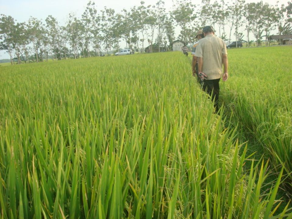 A coupled soil water and nitrogen balance model for flooded rice fields in India V.M.