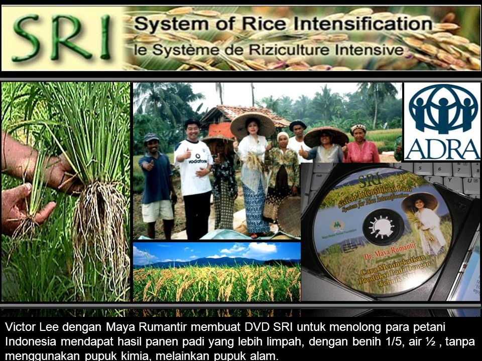 Victor Lee dengan Maya Rumantir membuat DVD SRI untuk menolong para petani Indonesia mendapat hasil panen padi yang lebih limpah, dengan benih 1/5, ai