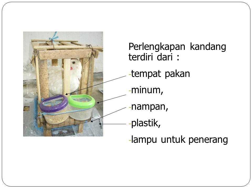 Perlengkapan kandang terdiri dari : - tempat pakan - minum, - nampan, - plastik, - lampu untuk penerang Kandang metabolis ukuran 20x15x25cm atau menyesuaikan ukuran ayam
