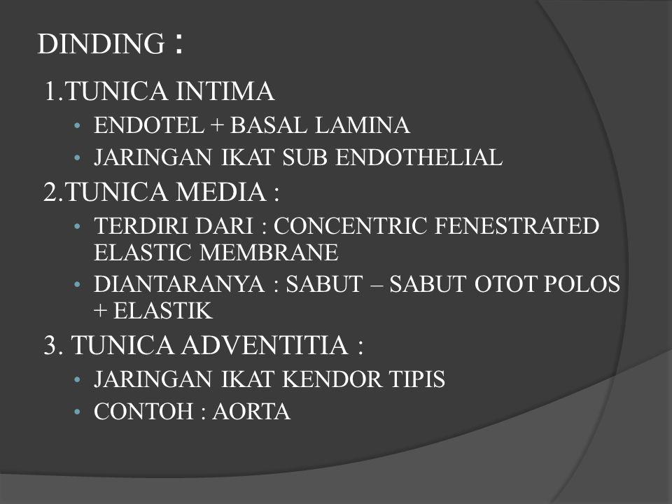 DINDING : 1.TUNICA INTIMA ENDOTEL + BASAL LAMINA JARINGAN IKAT SUB ENDOTHELIAL 2.TUNICA MEDIA : TERDIRI DARI : CONCENTRIC FENESTRATED ELASTIC MEMBRANE DIANTARANYA : SABUT – SABUT OTOT POLOS + ELASTIK 3.