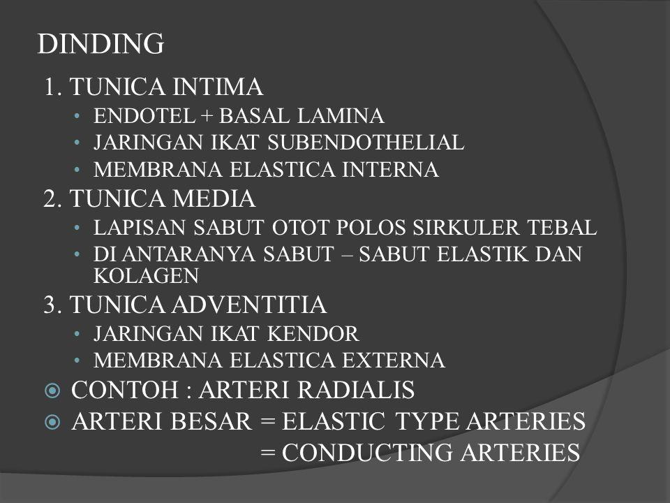 DINDING 1. TUNICA INTIMA ENDOTEL + BASAL LAMINA JARINGAN IKAT SUBENDOTHELIAL MEMBRANA ELASTICA INTERNA 2. TUNICA MEDIA LAPISAN SABUT OTOT POLOS SIRKUL