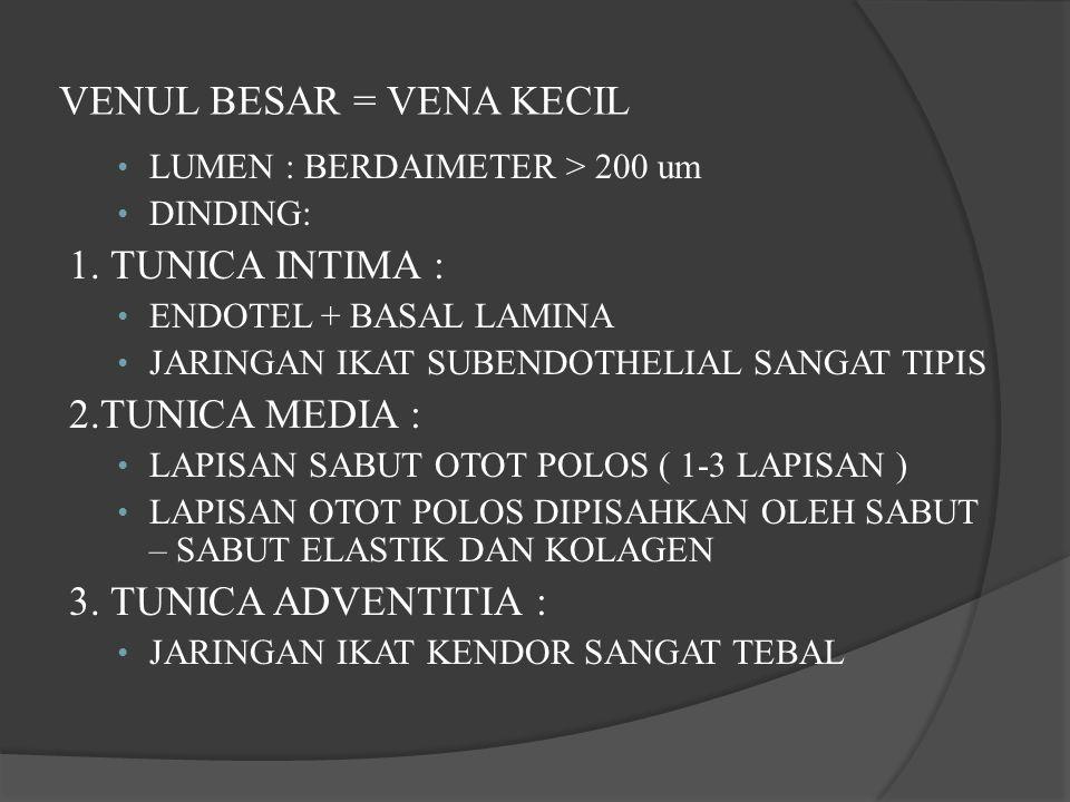 VENUL BESAR = VENA KECIL LUMEN : BERDAIMETER > 200 um DINDING: 1. TUNICA INTIMA : ENDOTEL + BASAL LAMINA JARINGAN IKAT SUBENDOTHELIAL SANGAT TIPIS 2.T