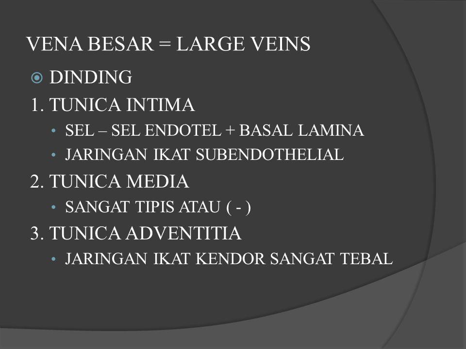 VENA BESAR = LARGE VEINS  DINDING 1. TUNICA INTIMA SEL – SEL ENDOTEL + BASAL LAMINA JARINGAN IKAT SUBENDOTHELIAL 2. TUNICA MEDIA SANGAT TIPIS ATAU (